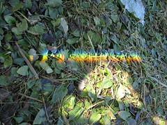 farben (the_boomerang) Tags: gras lichtbrechung a610 farbspektrum