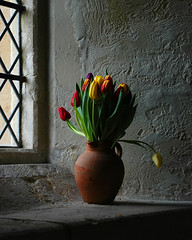 Tulips at St Mary the Virgin - by Monster.