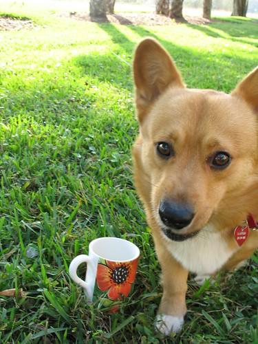 Sampson the Coffee Snatcher