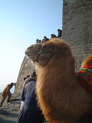 Camel [The Great Wall / Beijing] (d'n'c) Tags: travel castle asia beijing unesco camel greatwall   badaling ming   worldheritage greatwallofchina    mapchina