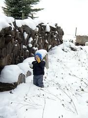 Hawken munching snow (ti.marie) Tags: ewing