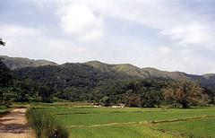 Green land (Tumkur Ameen) Tags: trees india nature ecology forest landscape rainforest wildlife falls western environment algae karnataka ahmed forests kaveri coorg madikeri westernghats ghats kutta ameen kodagu cauvery rainforests jungles i