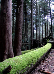Soft to Touch (Gary-Neil Richardson) Tags: seattle park tree green carpet washington moss log woods shoreline logs fallen hamlin carpeted