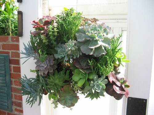 succulent wreath 2
