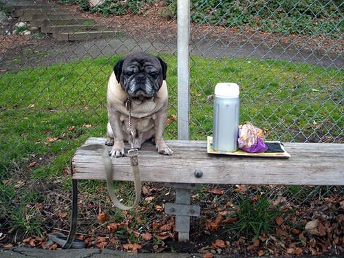 Pug With Thermos and Moldy Sandwiches