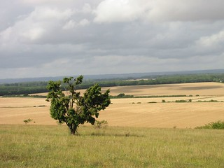 View from Danebury Ring