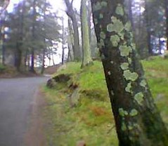 Tree Trunk and Moss (randubnick) Tags: cameraphone art phonecam photography moss treetrunk photograph earlyspring cellphonecamera endicottcollege beverlyma
