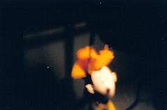 cowboy through a pinhole - by karlrobin