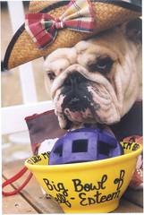 a daily dose for Heffala Humphrey - by bulldog1