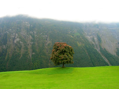 Lonely Tree (Pat Rioux) Tags: mountain tree green grass fog switzerland klausenpass