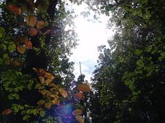 Light Shines Through (fubukizhirouen) Tags: sky light shine shining