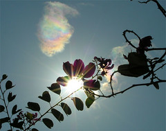 shiny day (yewco) Tags: sun ilovenature hongkong rainbow heart  bauhinia