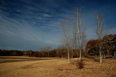 Winter Trio (Jeff Clow) Tags: ilovenature bravo nikond70 topc50 110fav willowgrovepark