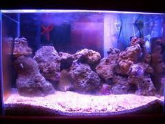 aquarium nano reef nanoreef
