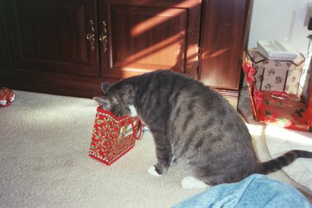 Kat present