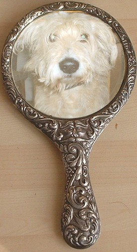 dog in a mirror