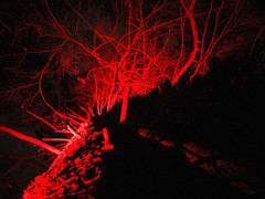 Lumberjack's delight (Taz etc.) Tags: red colour tree lights shadows catchycolours branches arboretum bark westonbirt 12daysofchristmas