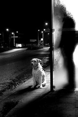 My guide and light in the dark (joto25) Tags: light dog pet cold night dark interestingness friend waiting labrador canine sr114 guide joto25 sr109 sr165 sgpowselected twtmeblogged artlibre sgpow45 jotography