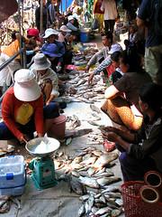 Vendita del pesce (**luisa**) Tags: market asia cambodia fish cambogia pesce mercato woman
