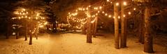 Christmas Lights at Night (quinet) Tags: christmas lights manningpark britishcolumbia winter