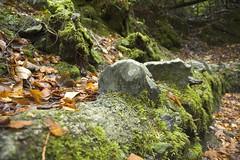 Green Wall (bfaust) Tags: ireland kylemore moss