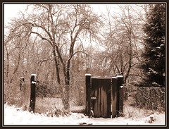 Winter Garden (bilus) Tags: odra szczecin snow winter notpicked