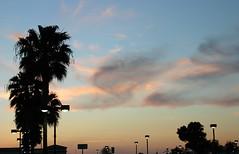 Camarillo sunset (sometimesong) Tags: 2005 california ca trees sunset sky usa roadtrip northamerica camarillo chemtrails sometimesong