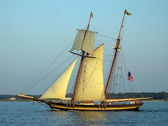 Pride of Baltimore II on the Chesapeake Bay (garyhymes) Tags: trees beach water topv111 sailboat bay boat wooden wind flag awesome maryland bluesky baltimore historic shore sail mast ropes hull top10 eastern soe chesapeake prideofbaltimoreii chesapeakebay interestingness7 clublevel marylandflag interestingnesstop10 98exl prideofbaltimore2 worldbest shieldofexcellence prideofbaltimoretwo