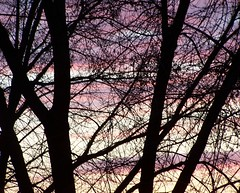 ...trough my window... (ManonManon) Tags: windov sunset tree nature sky colorscroatia