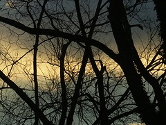 Sunset In Lexington VIII (mightyquinninwky) Tags: fontaineroad lexingtonky fayettecountyky kentucky clouds sunset trees december winter sky