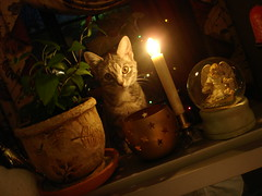 einstein rip ([endeyequote]) Tags: christmas cats holiday cat kitten feline december candle einstein pussy kitty kittens whiskers whisker kitties purr meow felines cateyes pussycat catseye kittie pussies cateye endeyequote eeq