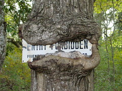 No Trespassing (Saveena (AKA LHDugger)) Tags: wild plant tree nature sign ilovenature flora rust all forrest no tx houston lisa any explore h 2550fav abandon rights posted urbannature trespass form written myfavorite rie without usage reserved kingwood allowed consent friendswood dugger houstonist interestingness92 explore29dec05 i500 top20sign top20signs  shieldofexcellence top20texas saveena
