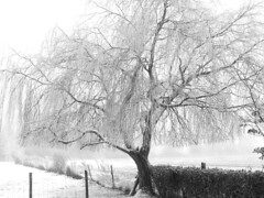 "frozen willow • <a style=""font-size:0.8em;"" href=""http://www.flickr.com/photos/87605699@N00/78927823/"" target=""_blank"">View on Flickr</a>"