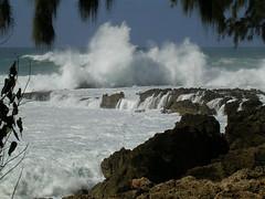 North Shore (Pink Hibiscus) Tags: hawaii nikon oahu action northshore 3200 allrightsreserved copyrighted nikon3200