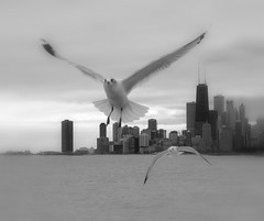 Happy New All (Luiz Felipe Castro) Tags: pictures copyright usa chicago bird animal fauna photography photo illinois interestingness photographer shot photos stock interestingness1 picture images il ill getty sell copyrights gettyimages fotografo reservado luizcastro 100vistas 1000vistas luizfelipecastro luizfelipedasilvadecastro abigfave duetos allrightsreserved donousethisimagewithoutautorization setget2012