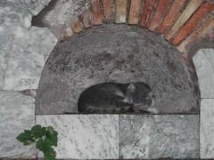 Ancient roman cat (ingirogiro) Tags: rome roma animal cat grey grigio gatto ostia ancientrome judgmentday405
