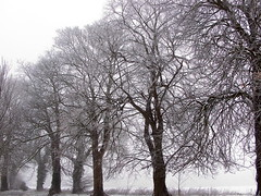 "frozen horse chestnut trees • <a style=""font-size:0.8em;"" href=""https://www.flickr.com/photos/87605699@N00/79491274/"" target=""_blank"">View on Flickr</a>"