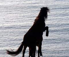 Godzilla vs Hedora (MadPole) Tags: uk horses horse animals caballo cheval ross cornwall kali uma cal ponies ros cavallo cavalo pferd esp mal kin konie each kuda alogo ka horsies hest equus hevonen chevaux paard cavall kon hors sous  rta kone yegua hst  hesp assa   l  morin ko arklys hestur hynder  whitesandsbay chaval koniki  perd  eoh  zaldi k caval chelee  ks caballu konj march  kabayo soquili sobah kobila evalo hobu hobune cjaval cabalo  ippos   kavaju  ghod  av  turag hross kavalo capall  kudure ciaval tashunke caballus zirgs k  iemel cahuayo kavale hengest mearh kaviyu grast harmasari grasni load heasta cubaddu acchettu coallu va k  beygir  madpolestream