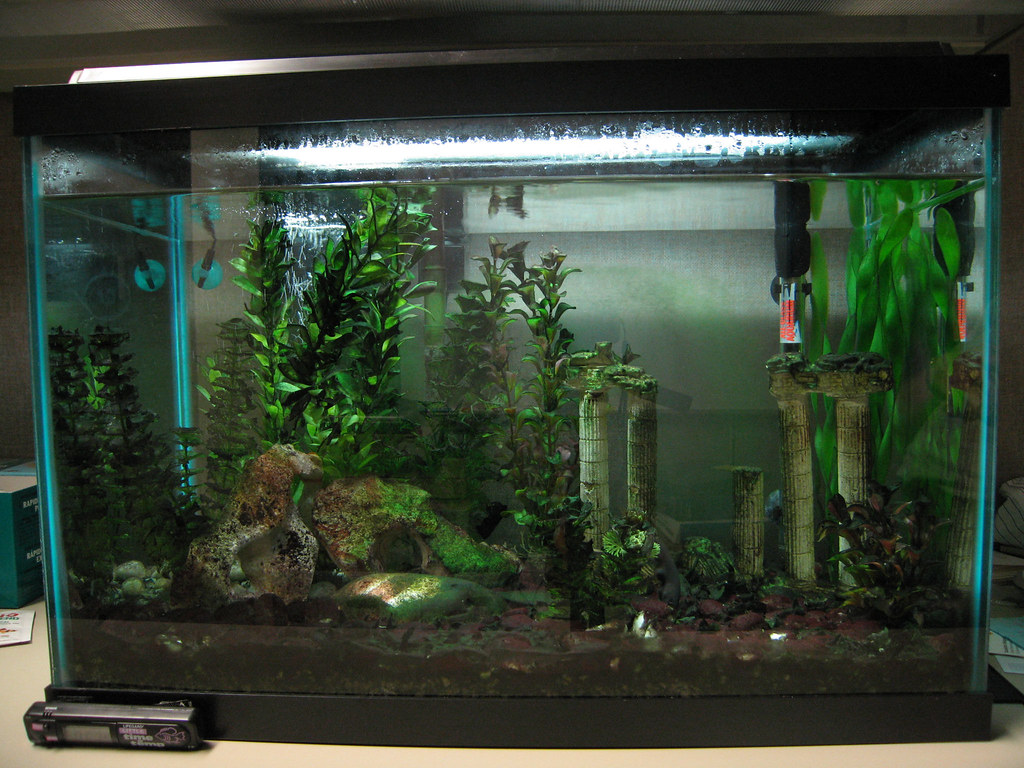 Fish tank filter maintenance best of your tank the most for Dirty fish tank