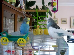 eric and louis (jaypod) Tags: budgie family kids