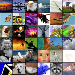 thank you (mimbrava) Tags: topv111 collage thankyou mosaic mimbrava 36faves flickrfavs2005 setflickrtoyscreations