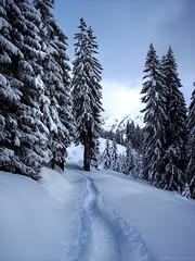 Snowtrack (_Marcel_) Tags: schnee trees winter snow france alps spur frankreich track path topf alpen bume weg topi top20fav