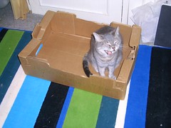 Pebble in box