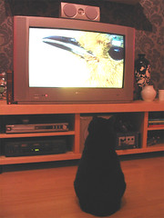 """""""that is a tasty bird"""" (she.likes.cute) Tags: jackey cat black television tube bird ikea lordoftherings twotowers"""