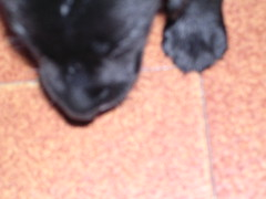2004-02-18 - Preta 02 (Henrique Oscar Loeffler) Tags: pets preta