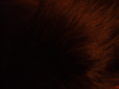 Cat Fur 04 (julipan) Tags: cat fur texture pussycat pussy closeup black hair cc creativecommons bysa sharealike julipan
