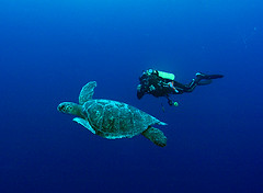 trtldvr1729w (gerb) Tags: blue topf25 beautiful topv111 1025fav 510fav wow cool topv555 topv333 underwater turtle topv1111 topv999 scuba fv5 loveit galapagos pi topv777 diver d100 topv3333 pfo 3waychallenge 3wc tvx 3w5 p1f1 top20blue somethingblueinmylife photofaceoffwinner theperfectphotographer pfogold