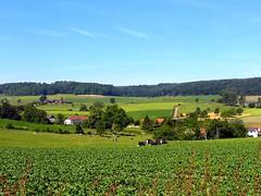 Zuid Limburg (Coanri/Rita) Tags: holland green netherlands landscape countryside europe cows thenetherlands meadows serenity breathtaking limburg coanri 123nllimburg coanririta