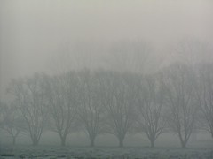 the day the colours stayed away (e) Tags: haze mist willows december colours slaaptintstro weideaanonzeabri tree trees bomen nevel seasons winter vlaanderen flanders