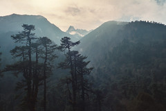 Mountain forest mist